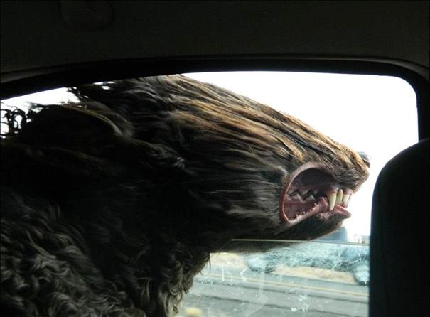 dog-wind-1