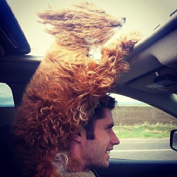 dog-wind-2