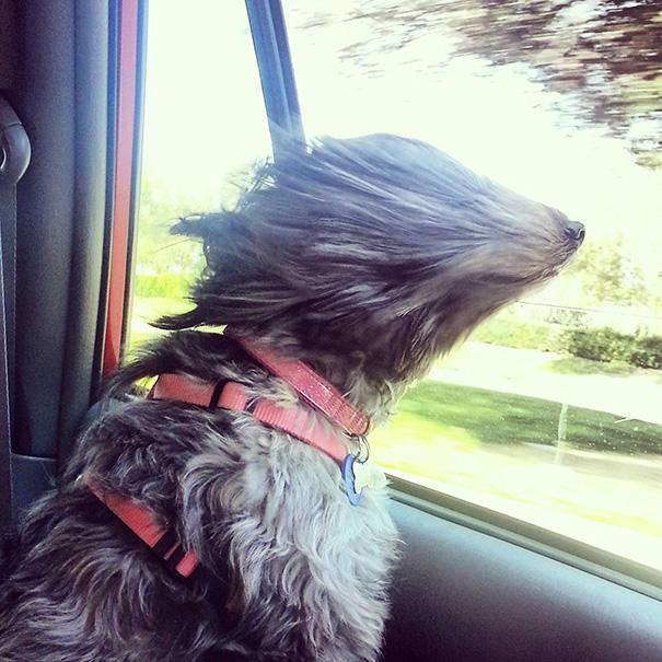 dog-wind-6