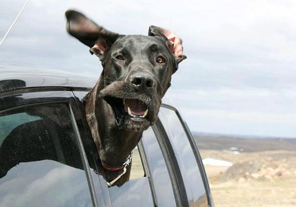 dog-wind-7