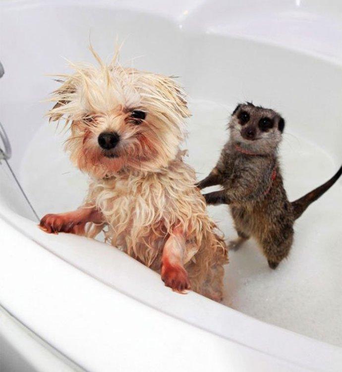 сестра мылась и попросила брата потереть ей спинку