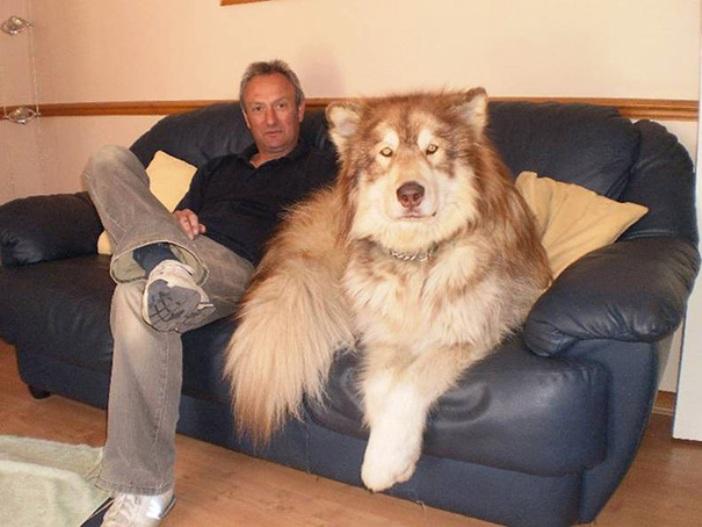 big-dogs-10
