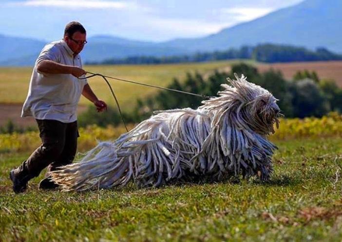 big-dogs-11