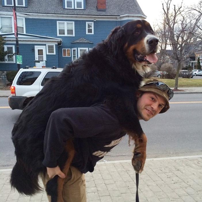 big-dogs-14
