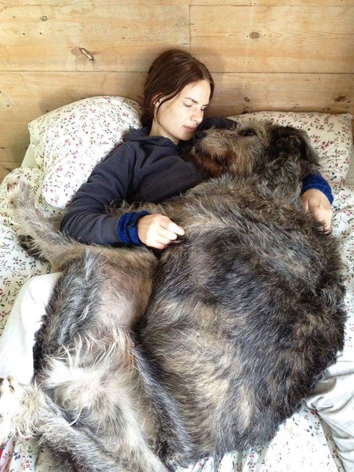 big-dogs-2