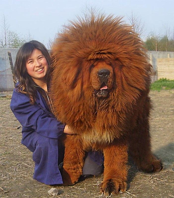 big-dogs-3