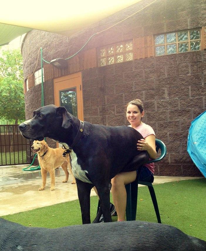 big-dogs-5