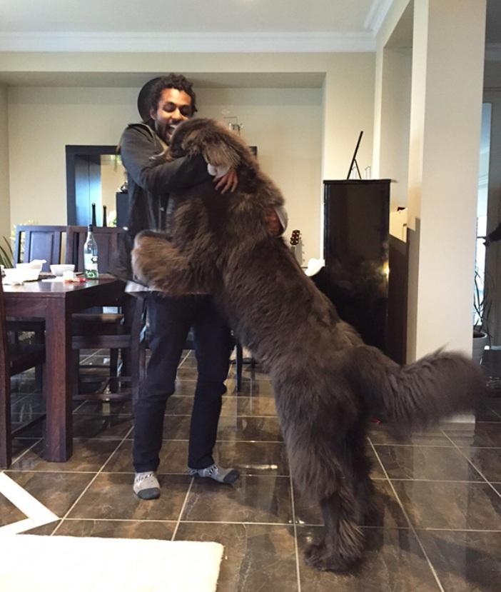 big-dogs-6