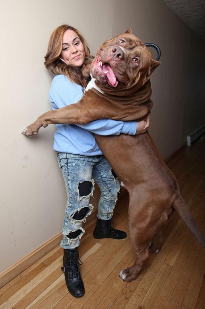 big-dogs-8