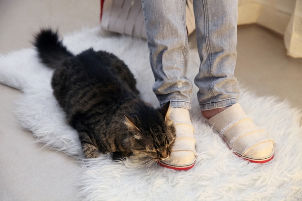 Mobel Fur Haustiere Komfort Sichern