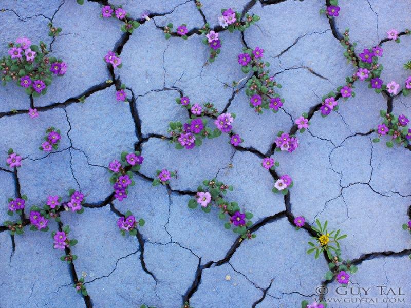 krasochnye-cvety-v-pustunyah-uti-5