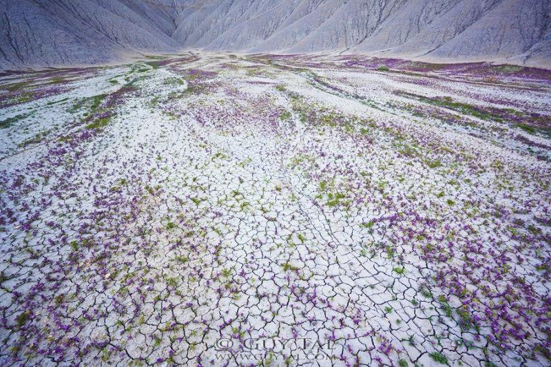 krasochnye-cvety-v-pustunyah-uti-7