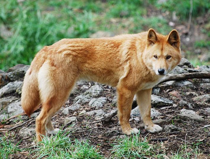 rijiy-volk