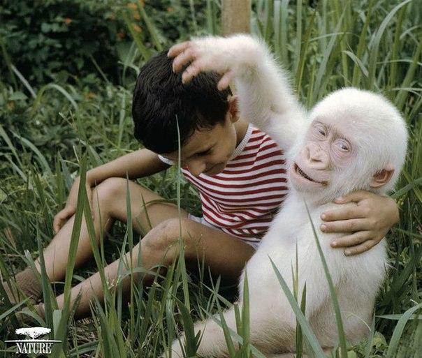 Zhivotnye_albinosy1