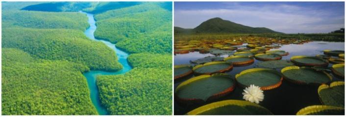 dojdevie-lesa-amazonii1