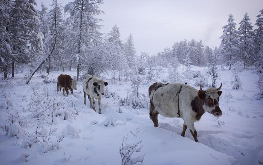 samiy-holodniy-gorod-na-zemle-12