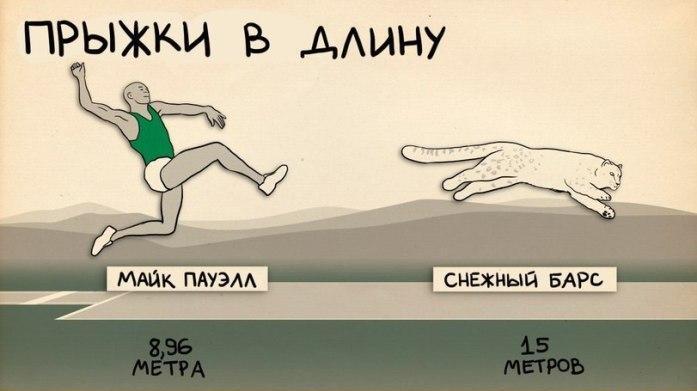 sportivnye-dostizheniya-cheloveka-i-zhivotnogo-2