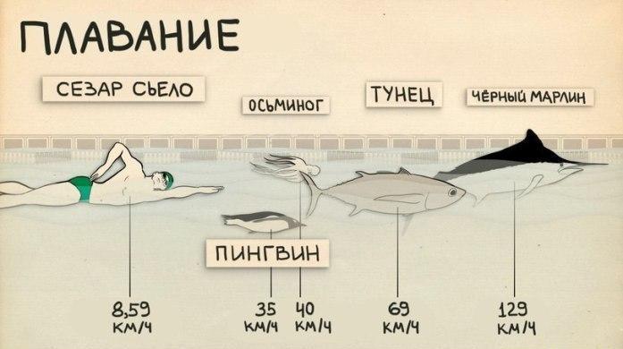 sportivnye-dostizheniya-cheloveka-i-zhivotnogo-3