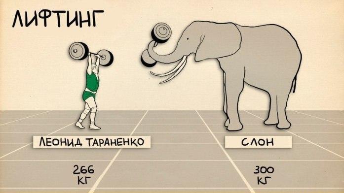 sportivnye-dostizheniya-cheloveka-i-zhivotnogo-4