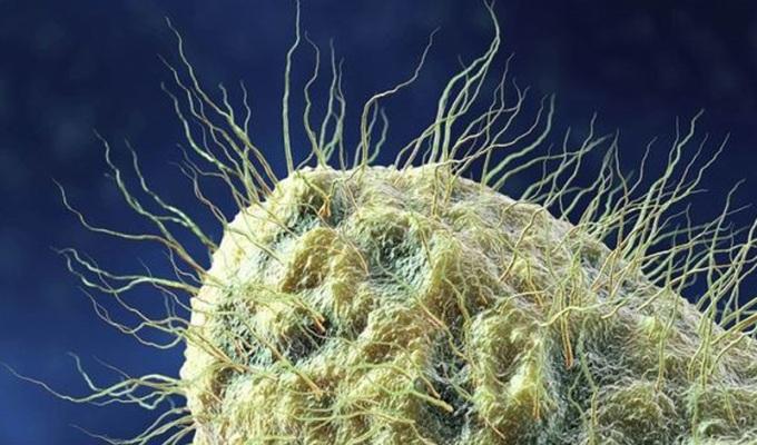 5-nepriyatnih-organizmov-kotorye-zhyvut-ryadom-s-vami-3