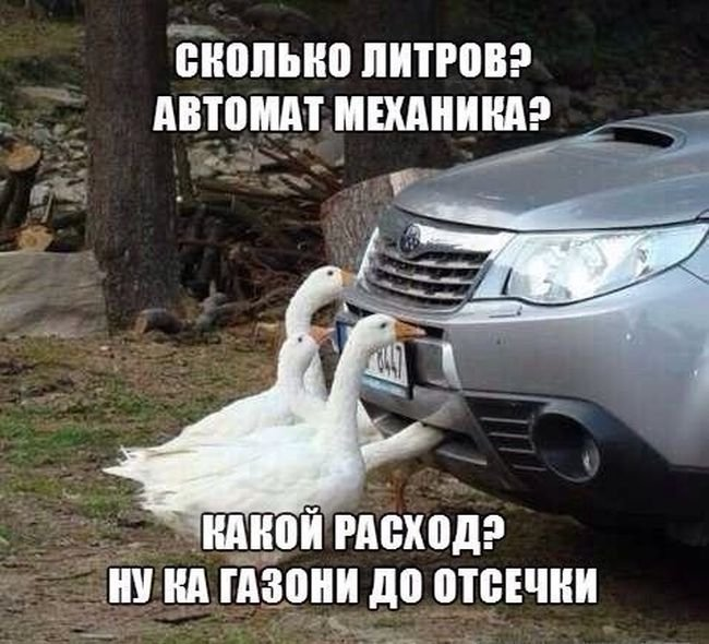 umor-dlya-avtomobilistov-i-peshehodov-5