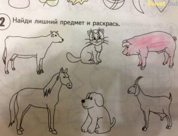 И в чем виновата свинья?