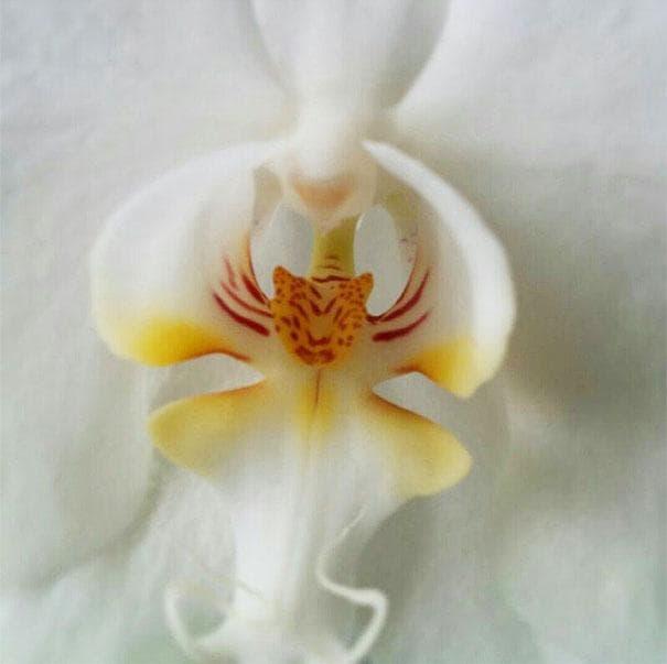 cveti-11-min