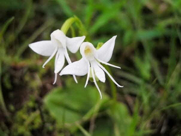 cveti-13-min