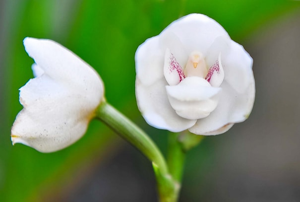 cveti-14-min
