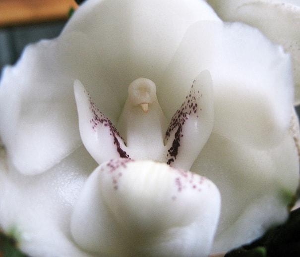 cveti-15-min