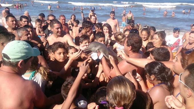 turisty-do-smerti-zaselfili-detenysha-delfina-1