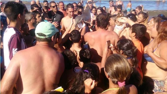 turisty-do-smerti-zaselfili-detenysha-delfina-2