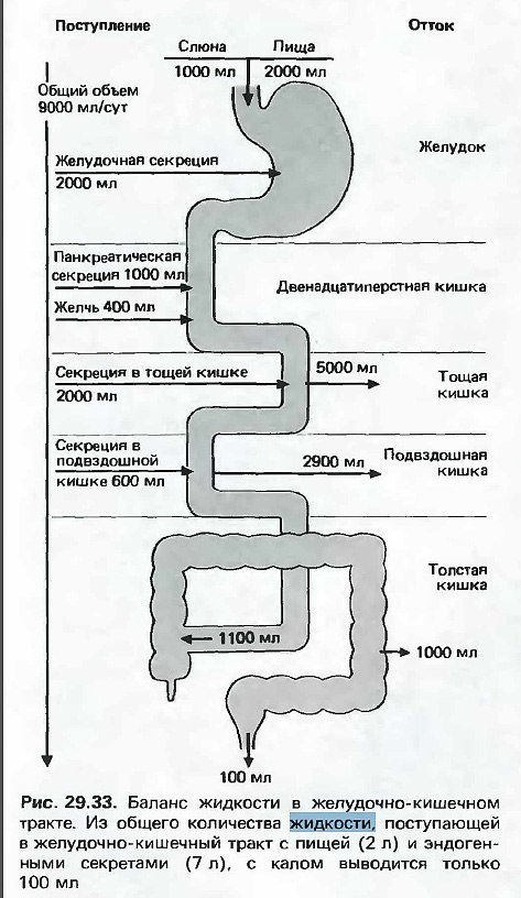 vredno-li-pit-vodu-vo-vremya-edy-3