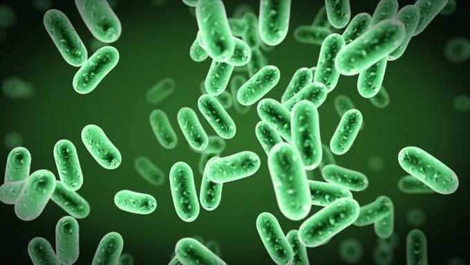 10-udivitelnyh-organizmov-kotorye-zhyvut-neveroyatno-dolgo-7