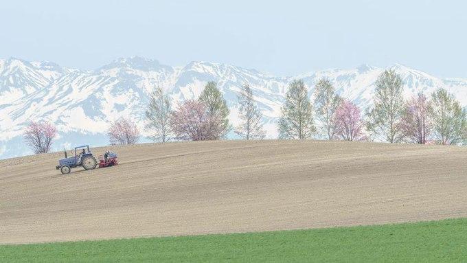 Цвет весенних работ. Фотограф Hiroki Inoue