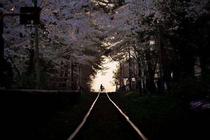 Весенний вечер. Фотограф Sho Shibata