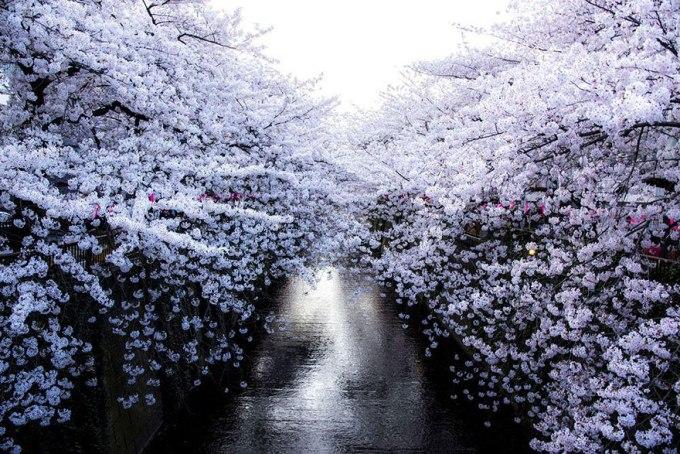 Белая стена. Фотограф Masayuki Yamashita