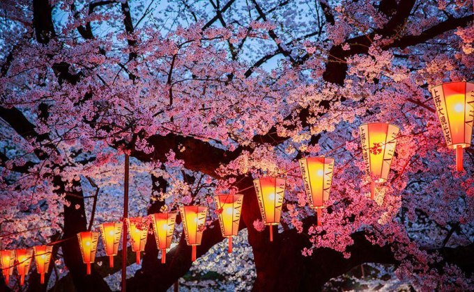 Вечерняя сакура. Фотограф Aurora Simionescu