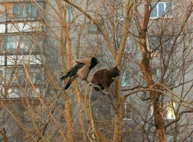 cats-like-birds-1