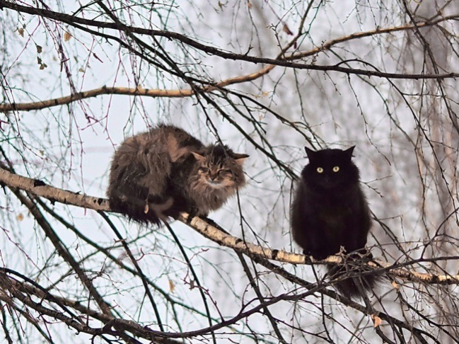 cats-like-birds-2