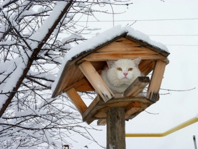 cats-like-birds-3