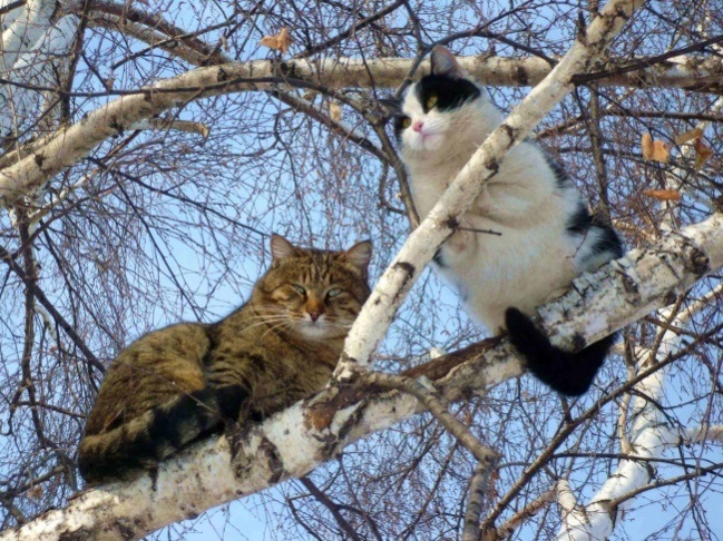cats-like-birds-5