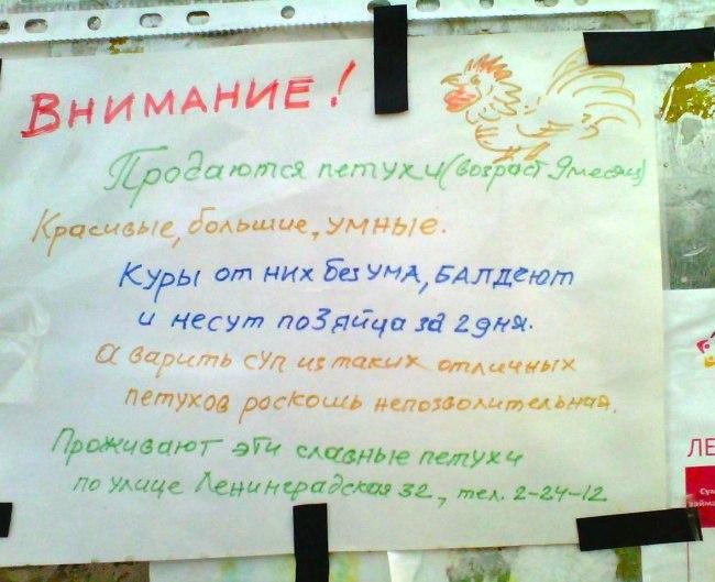 podborka-shedevralnyh-obyavleniy-4