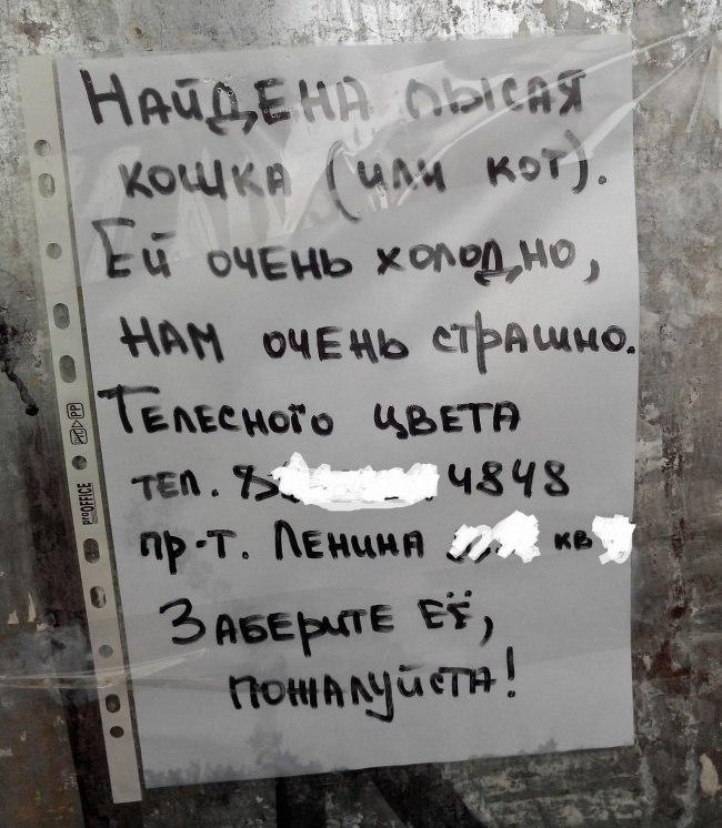 podborka-shedevralnyh-obyavleniy-6