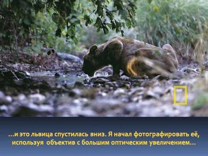 zahvatyvayshaya-istiriya-odnogo-snimka-dikoy-prirody-2