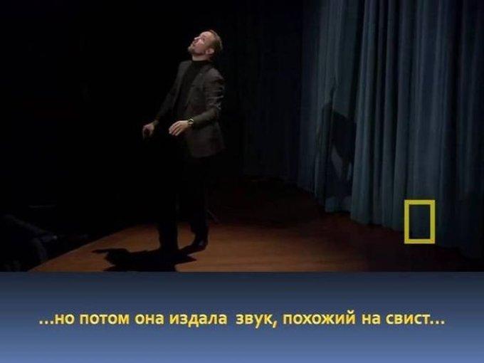 zahvatyvayshaya-istiriya-odnogo-snimka-dikoy-prirody-4