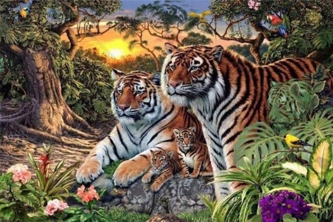 skolko-tigrov