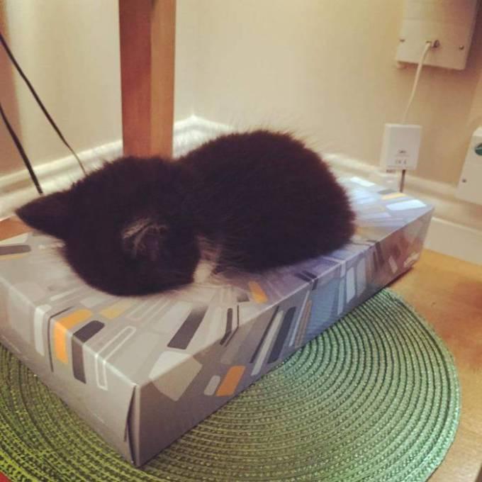 Котенок Омар уснул в коробке из-под салфеток.