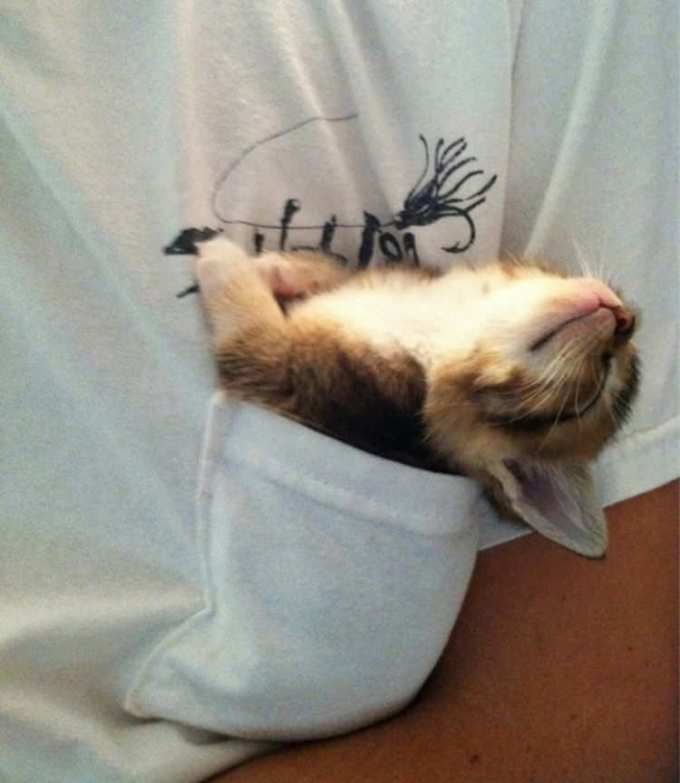 Уснувший в кармане.