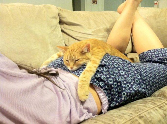 Этому коту позавидуют многие парни.